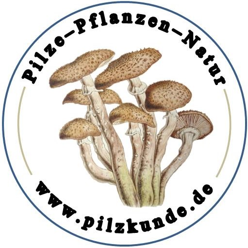 Pilzkunde, Seminare, Tagesführungen, Pilze, Schwäbisch Gmünd, Baden-Württemberg, Stuttgart