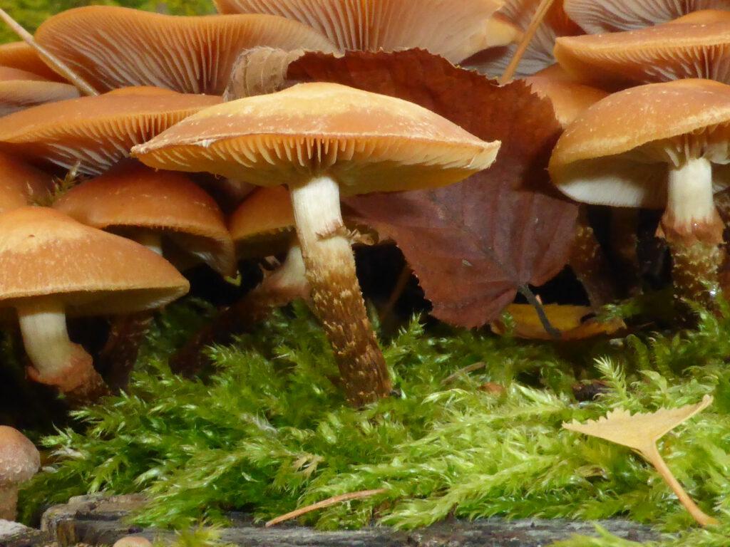 Pilze, Pilzseminar, Pilzkunde, Schwäbisch Gmünd, Pilzführung, Fortbildung